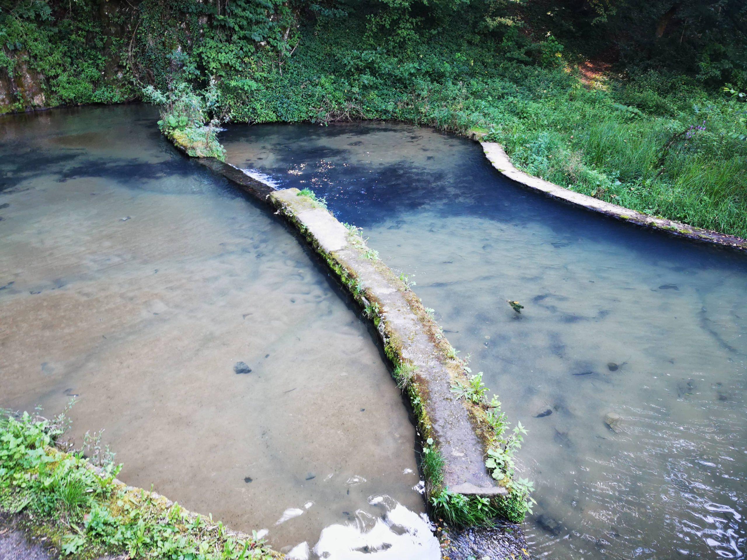 Zašto su nam važne čiste reke i zašto nam je važan Gradac?