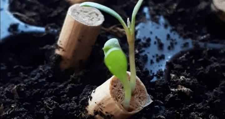 BRAVO DECO: Izum đaka iz Srbije mogao bi da promeni svet i očuva životnu sredinu
